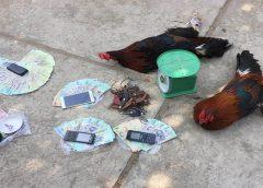<span>Tin cá cược nhà cái W88: Triệt phá nhiều tụ điểm đá gà, đánh bạc tại Tiền Giang</span>